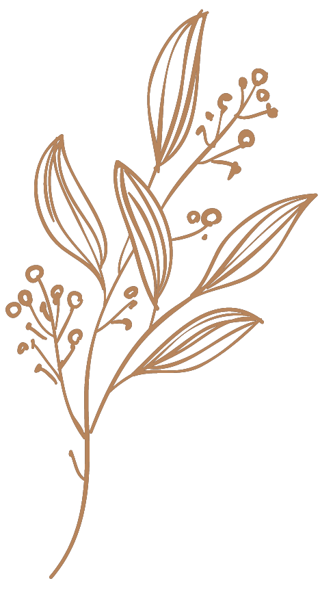 Pflanze 5 Braun